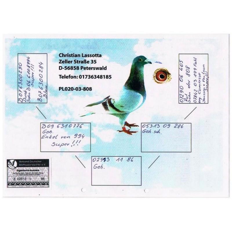(11) Gołąb DV 02513 11 86
